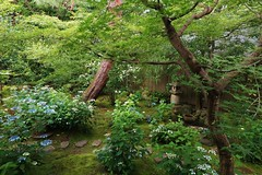 The Garden of Amacha-Kanro-tei/Kyoto Kennin-ji Reigen-in京都 建仁寺霊源院 甘露庭 (maco-nonch★R) Tags: japanischer japanesephotographer japon japan japón japanesetemple buddhism zen zengarden zentemple giappone giapponese kenninji reigenin kyoto kioto eosm5 日本 jardín japonés