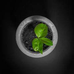 lemon - circle - square (LG_92) Tags: lemon concrete green plant black grey potter diy top leaf leaves 2018 june nikon dslr d3100 round circle squareformat