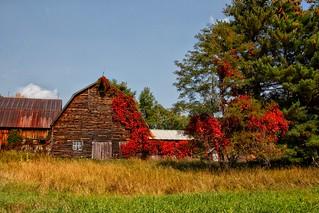 Lake Placid  New York - Vintage Homestead Abandoned -  Autumn