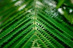 Neat nature (Puiu.Bogdan) Tags: green leaf geometrical