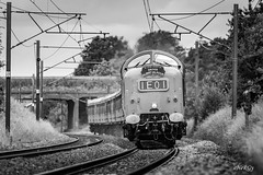 Deltic 55009 Alycidon - 16/6/18 (deltic17) Tags: dps deltic delticpreservationsociety deltics railtour excursion charter train travel transport rail railway diesel heritagediesel loco locomotive locohauled napier ee englishelectric twostroke ecml eastcoast eastcoastmainline albertgilmour 52a blackwhite monochrome canon canon5dmk3
