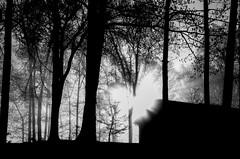 temporal rift (RubyT (I come here for cameraderie!)) Tags: ferraniap30alpha film analog nikonteletouch fog trees house landscape flare sunflare lensflare черноеибелое bw nb bn mono monocromo monochrome noirblanc blancoynegro schwarzweiss blackandwhite