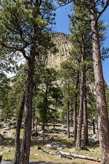 Devil's Tower National Monument (Joe Eisel) Tags: tamronsp2470mmf28divcusd geological formation laccolithic butte igneous rock evergreen conifer pine boulder bearlodgemountains blackhills sky tree wyoming devilstower