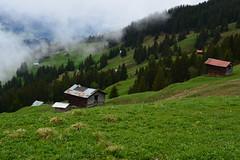 Nebelschwaden und leichter Nieselregen (balu51) Tags: wanderung pfingsten pfingstwetter nebel nieselregen grau nass landschaft alp alphütten stall grün