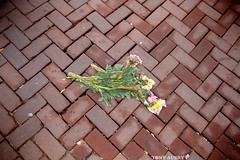 Plat (B N C T O N Y) Tags: amsterdam hollande holland nl street art life portrait