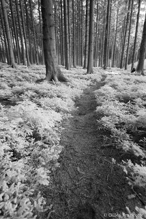Path in the wood.