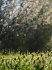 Spring Meadow Pasture Nature Germany Bavaria Countryside © Frühling Wiese Bayern Oberbayern © (hn.) Tags: 2018 april bavaria bayern blossom blossoming blowball blume blühen blüte busch copyright copyrighted dandelion deutschland dew eu europa europe feld field flora flower flowering frã¼hling frühling frühlingsblume gaissach germany greeneland hecke hedge hedgerow heiconeumeyer löwenzahn meadow morgentau morningdew natur nature oberbayern pasture pflanze plant pusteblume shrub spring springflower strauch taraxacum taraxacumofficinale tau tã¶lzerland upperbavaria wiese wildflower wildflowers wildblume wildblumen gaisach
