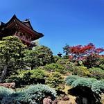 Japanese Tea Garden thumbnail