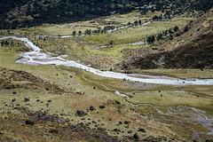 Rivers in a valley near Robluthang - Gasa District - Snowman Trek - Bhutan (PascalBo) Tags: nikon d500 asie asia southasia asiedusud drukyul drukgyalkhap bhutan bhoutan འབྲུག་ཡུལ། འབྲུག་རྒྱལ་ཁབ་ snowman trek trekking hike hiking lunana himalaya himalayas jigmedorjinationalpark gasa river rivière landscape paysage outdoor outdoors pascalboegli