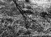 Branch Touching Ground (Hyons Wood) (Jonathan Carr) Tags: ancient woodland analog rural northeast hyonswood monochrome black white bw landscape hp5 tree mediumformat mamiya 645
