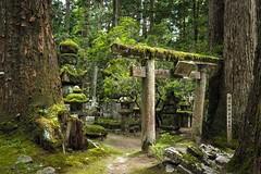Mausolée Kôbô Daïshi Unesco site Japon (geolis06) Tags: geolis06 asia asie japan japon 日本 2017 koyasan montkoya kôbôdaïshi kukai shingon bouddhisme bouddha buddhism religion mausoléee mausoleumofkôbôdaishi olympuspenf olympusm1240mmf28
