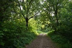DSC_0149 (silenceinthelib) Tags: nikond3400 d3400 nature forest trees russia park