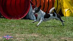 _DSC0978 (SeverX9) Tags: sony alpha 6500 70200gf4 dog run