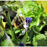 A Blooming Bee-eautiful Butt thumbnail