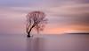 A bird in a tree, in a storm, on a lake (ajecaldwell11) Tags: xe3 sunrise storm ankh purple water fujifilm light trees laketaupo newzealand tree rain pink longexposure willow sky taupotree shag caldwell dawn clouds