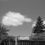redwood in B+W 6 17 18 thumbnail