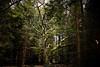 Brackvenn_Hochmoor (Micsae_) Tags: landschaft belgischesvenn hochmoor moor forest wald stimmung belgien belgium outdoor hohes venn landscape wood holz brack canon canon5dsr ef 35mm licht light
