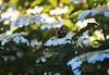 Elmar 90-F4-f4.5 (asddsa699647) Tags: elmar 90 бабочка мотылёк солнце свет
