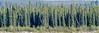 Trees on the west bank (Kristaaaaa) Tags: fortgoodhope northwestterritories