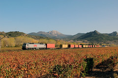LCR en los viñedos (MACD 3) Tags: lowcostrail lcr 333336 rosco vossloh teco msc tren train canon eos600d adif viñedos prima