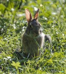 Torbiere del Sebino (capellini.chiara) Tags: naturephotography life vita cuteness cuty natura bunny coniglio