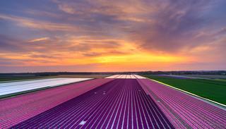 Purple fields.