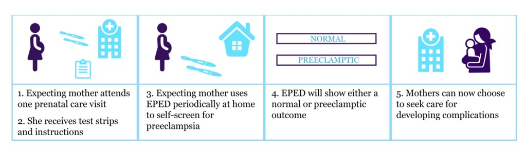 Makerere University - The EPED strip  (Early Preeclampsia  Detection Strip) and the strip components