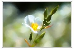 Flower Painting (Jens III) Tags: digitalpainting flickr flower colorful blume blossom beautiful amateur painting