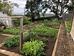 Organic Vegetable Garden (RobW_) Tags: organic garden thehydro lindida stellenbosch western cape south africa thursday 15mar2018 march 2018