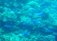 Fish in the Barrier Reef (Stanley Zimny (Thank You for 30 Million views)) Tags: australia barrier reef blue travel ocean fish coral