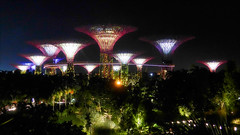 Nightfall over the Golden Towers (kate willmer) Tags: night light trees garden towers building architecture singapore