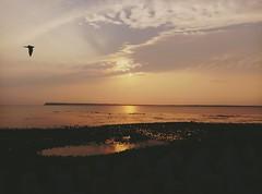 the golden moment (Yoman H) Tags: island sunset asia taiwan reflection seashore spring 澎湖 西灜虹橋 馬公 evening penghu