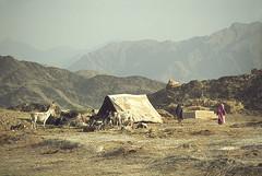 CAMPEMENT AFGHAN (Jean d'Hugues) Tags: afghanistan afghans tente troupeau ânes vallée nomades montagnes mountains nomads valley donkeys herd rose pink afghanes