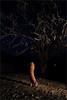 वनकन्या, hafeshwar (nevil zaveri (thank U for 15M views:)) Tags: zaveri people india hafeshwar rural tribal village tree trees woman women dark night dusk photography photographer images photos blog stockimages photograph photographs nevil nevilzaveri stock photo gujarat gujrat shy