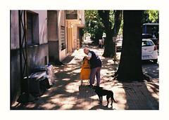 (Miguel E. Plaza) Tags: olympus om1 kodak kodakcolorplus colorplus200 filmphotography film filmcamera analog analogphotography streetphotography argentina laplata 35mm ishootfilm verde arbol tree