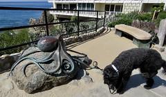 Octopus on the Bluff (Bennilover) Tags: lagunabeach octopus sculpture benni labradoodle ocean art bluff