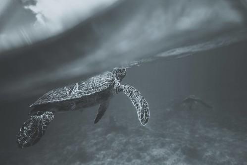 Sea Turtle Moments Maui