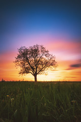 Sunset (Marc Braner) Tags: ifttt 500px sunset sun dramatic sky dusk moody horizon twilight backlit sunbeam rhinelandpalatinate worms germany europe outdoors old town landmark over land cultivated agriculture farm rural mist rheinhessen fields landscape tree field scene