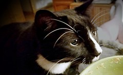 Sneaky (MoparMadman63) Tags: pet cat curious curiosity cute bowl humorous funny soft looking ears