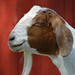 It's Time for a Goat.