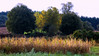 Maiz / Corn (López Pablo) Tags: corn tree yellow green galicia spain wayofsaintjames nikon d7200 nature