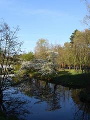 Netherlands-201804-31-Blossoms (Tony J Gilbert) Tags: holland scheveningen denhaag nikon landscapes netherlands thehague hague