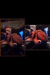 Wildlife. Octopus. (hacbs) Tags: lonelyplanet wildlifevideo waterwildlife instagram nature wildlifephotos wildlifeperfection wildlifecaptures wildlifelovers wildlifevideos wildlifeofinstagram wildlifeshots wildlifeplanet wildlifevision wildlifeonearth wildlifephotography wildlifephoto wildlife