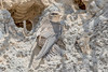 DSC1998  Sand Martin... (jefflack Wildlife&Nature) Tags: sandmartin hirundines summermigrant birds avian animal animals wildlife wildbirds wetlands sand sanddunes countryside nature wildlifephotography jefflackphotography