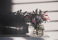 Evening light (V Photography and Art) Tags: wildflowers sunlight eveningsun naturallight fuji light shadows