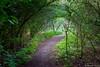 Le passage (musette thierry) Tags: musette thierry nikon nature vert passage chemin balade naturel printemps d800 feuille arbre