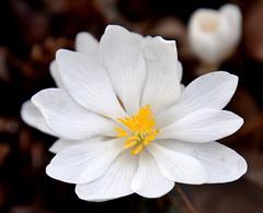 White&YellowFlower (T's PL) Tags: bloom blooms communityarboretum d7200 nikon nikontamron nikond7200 nikondslr roanoke roanokeva tamron18400 tamron18400mmf3563diiivchld tamron18400mmf3563diiivchldmodelb028tamron va virginia virginiawesterncommunitycollege virginiawesterncommunitycollegecommunityarboretum vwcc vwcccommunityarboretum whiteandyellowflower
