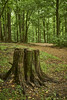 Bush walking (Valley Imagery) Tags: maryland trees green path tree stump sony a99ii