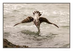 Seafood is best eaten fresh! (JohnKuriyan) Tags: berkeley california unitedstates us