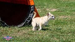 _DSC0759 (SeverX9) Tags: sony alpha 6500 70200gf4 dog run